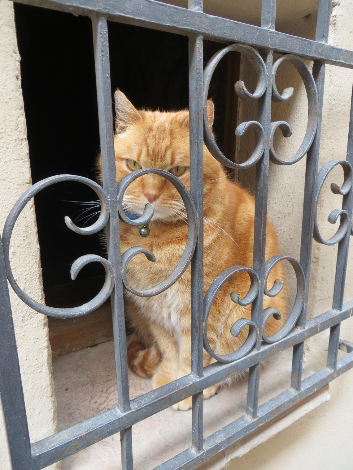 Montepulciano cat, Italy